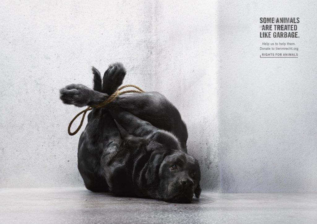 campanha-animais-lixo-2